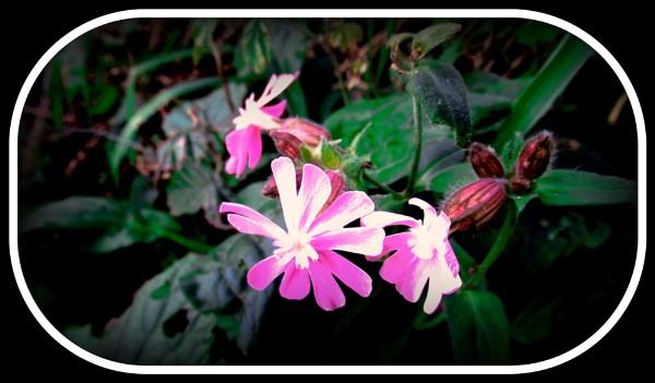Wild Flower by Don20