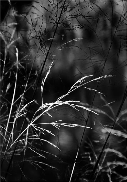 Lakeside Grasses by AlfieK