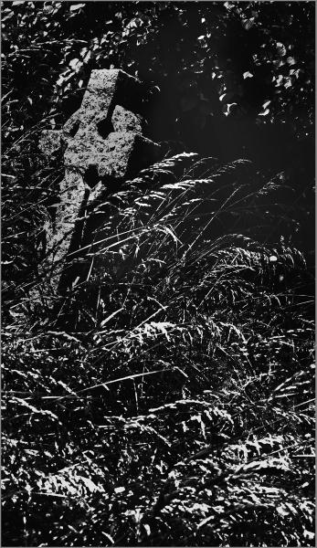 Overgrown by AlfieK