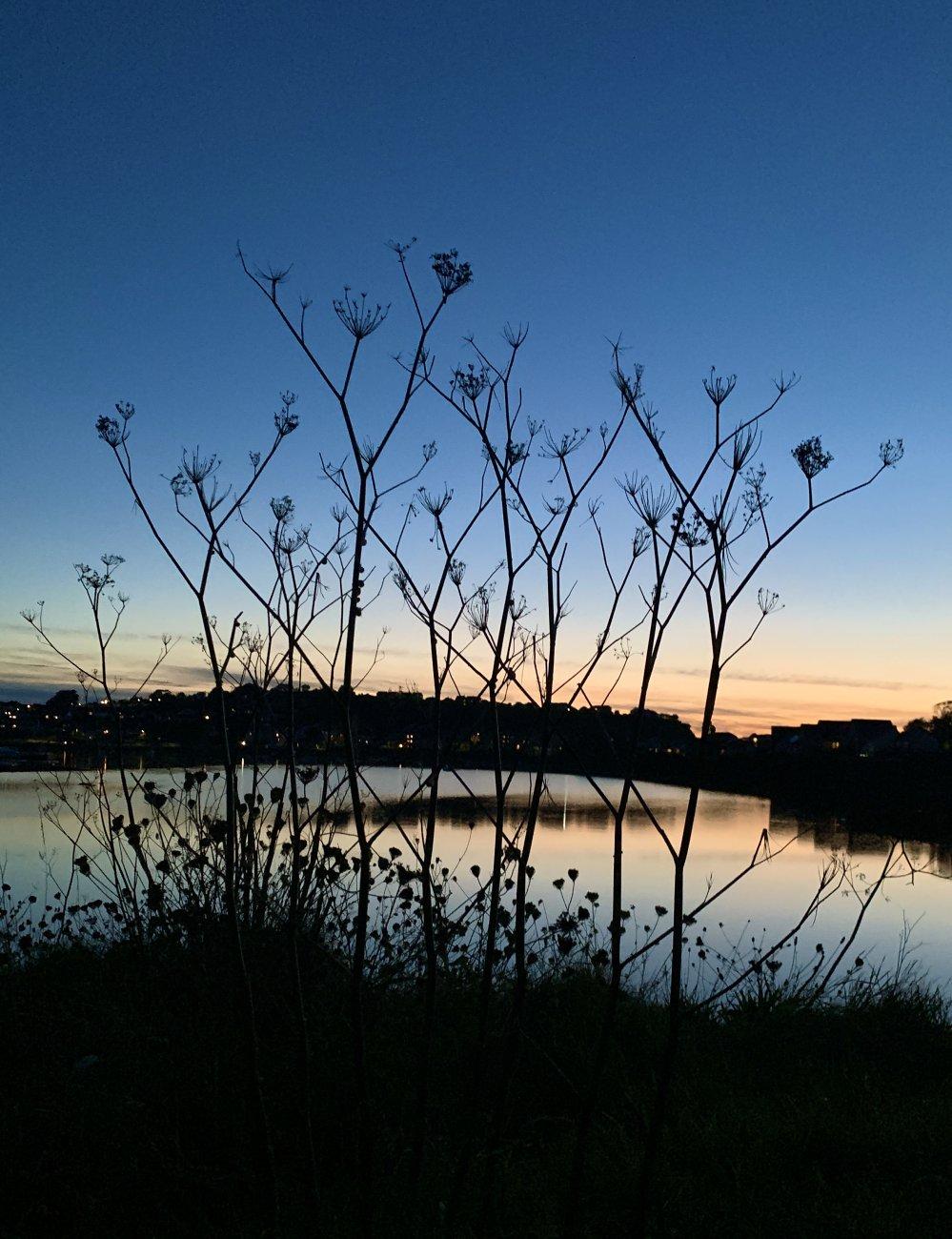 Lakeside Silhouette