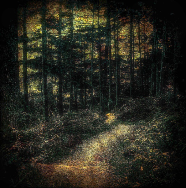 Pathway Through the Woodland by adagio