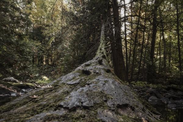Dead Wood by DBoardman