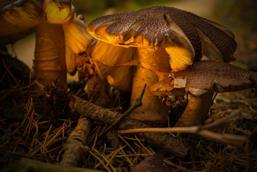 A Bit More Fungi.