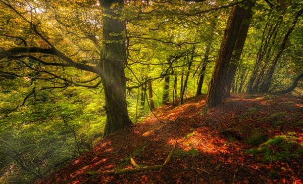 Autumn Light by douglasR