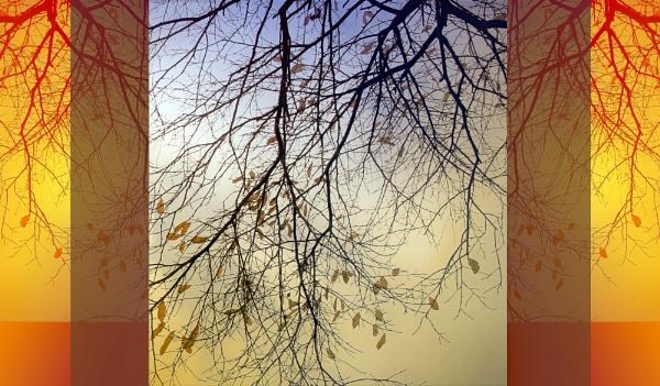 Falling leaves by helenlinda