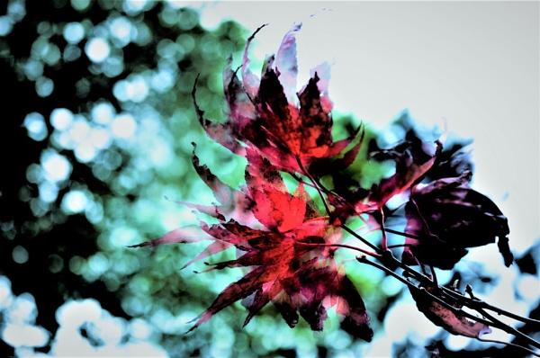 Fluttering by helenlinda