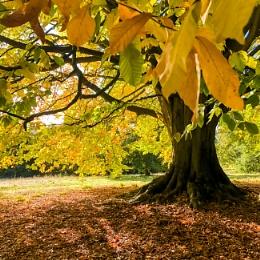 Autumn colours the Tree