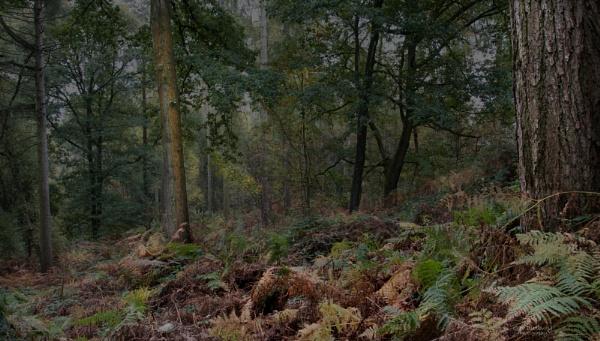 Woodland Scene by Gavin_Duxbury
