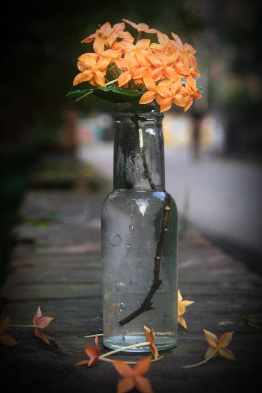 Flower Candid