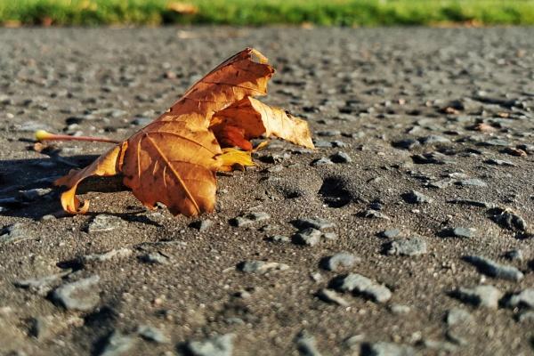 Autumn sun by wisk