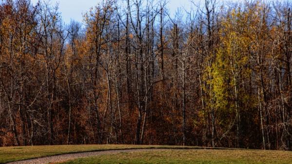 Autumn by FrancisChiles