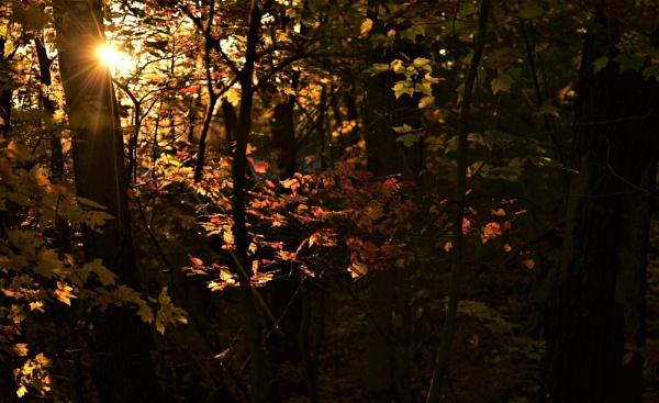 Morning light by djh698