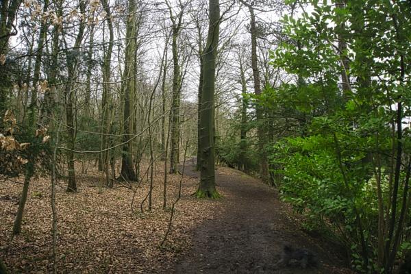 A Woodland Path by woodini254