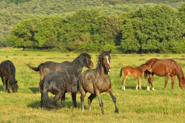 Horses by luminus