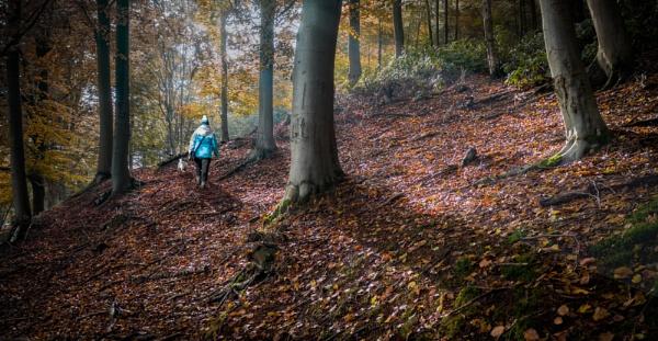 The Woodland walk by Stevetheroofer