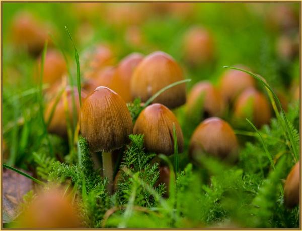 mushroom eruption... by estonian
