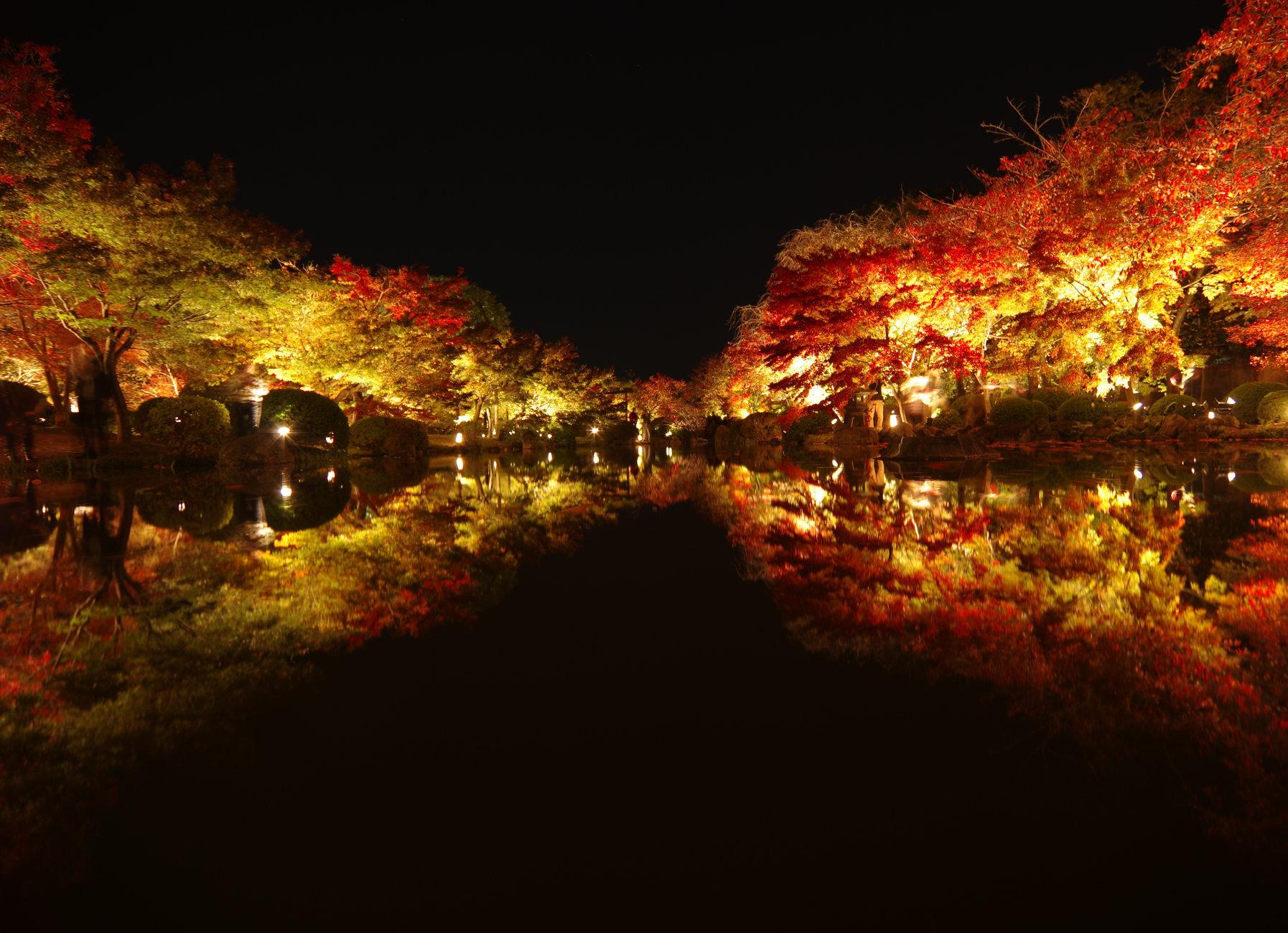 Autumn in night