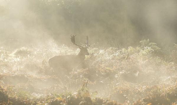Fleeting Shadows in the mist by Alffoto
