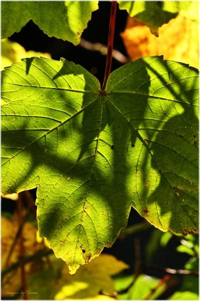 Leafy Shadows. by Tooma