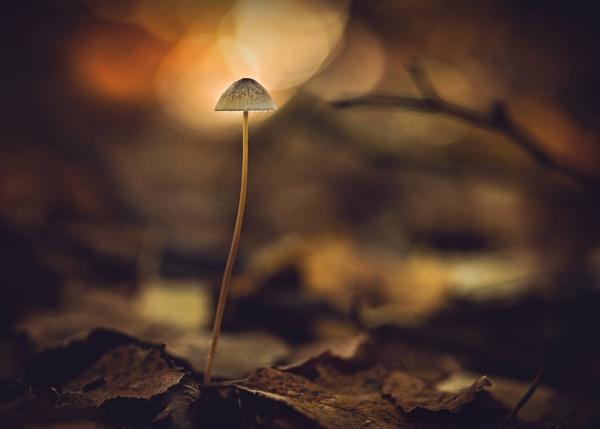Autumn by KristinaZvinakeviciute