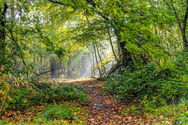 Walk towards the light by OverthehillPhil