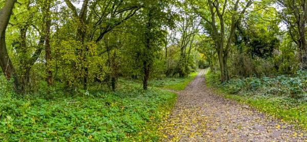 Woods walk by OverthehillPhil