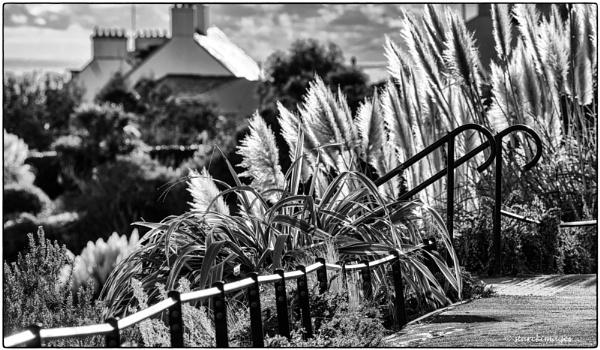Langmoor Gardens, Lyme Regis by starckimages