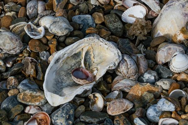 Sea shells by DougalDogPhotos