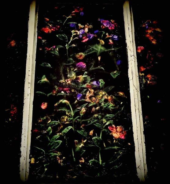 Pressed Flowers by adagio