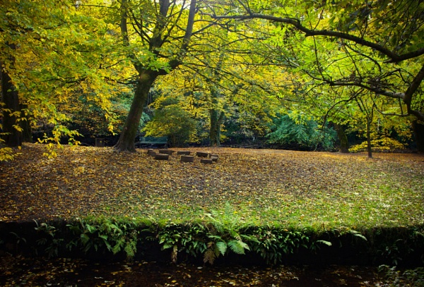 Autumn woods with meeting circle by AliEscobar