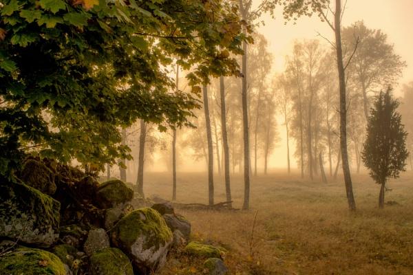 Misty by Leikon