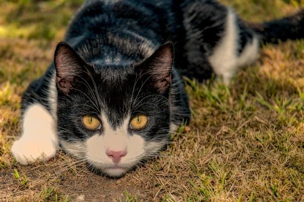 Cat by Leikon