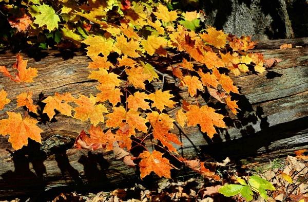 Leaf shadows by Joline
