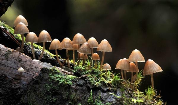 Mushroom City by viscostatic