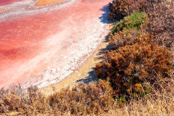 Salt tank colors by Neopolis