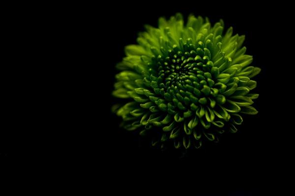 Green flower on black by CRAIGR2