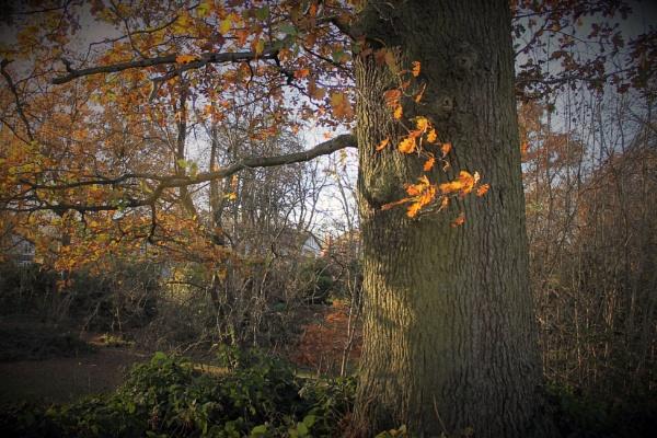 Golden Leaves by helenlinda