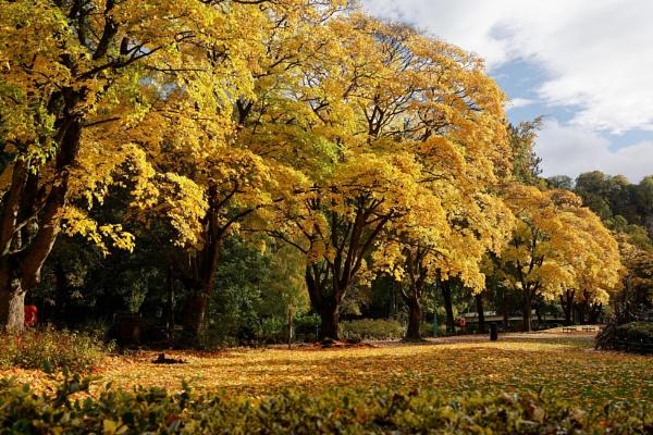 Matlock park Derbyshire by RoyChilds