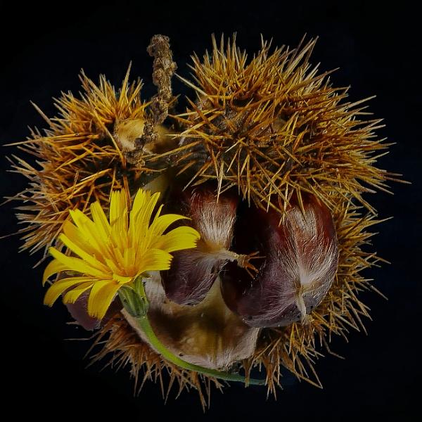 Prickly Nest by Shamley