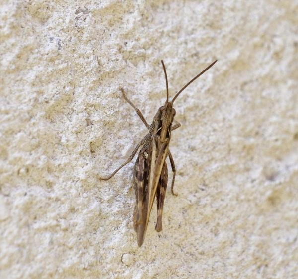 Ahhh ,,,,,,Grasshopper !!!!!! by sparrowhawk