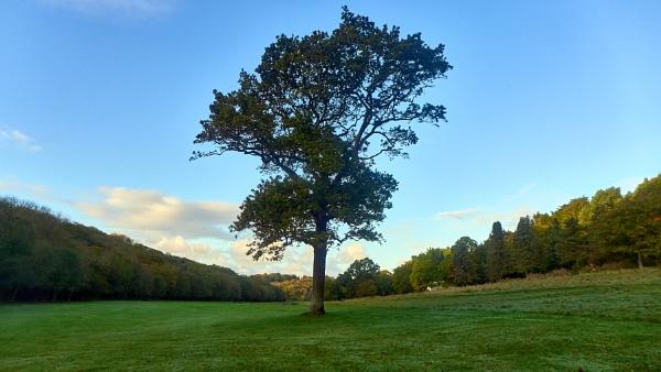 Lone tree ... by Meditator