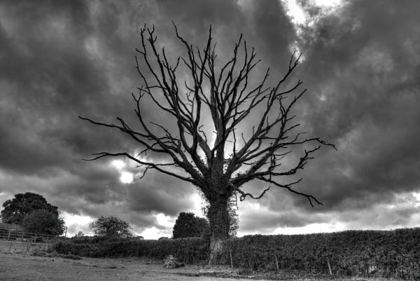 The Photogenic Monochrome Tree by neily_m