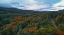 Tollymore Forest - N.Ireland by atenytom at 23/10/2020 - 10:13 AM