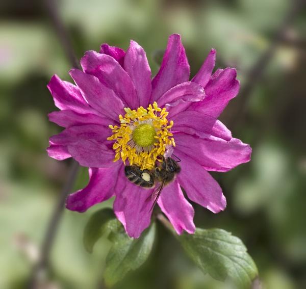 An abundance of pollen by CaroleS