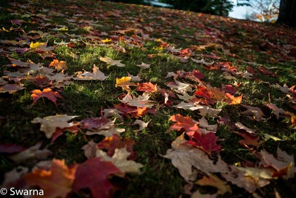 End of Fall... by Swarnadip
