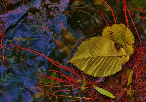 Autumn on the pond. by georgiepoolie