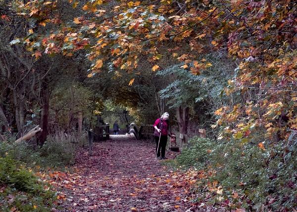 Autumn Colors by pauljt