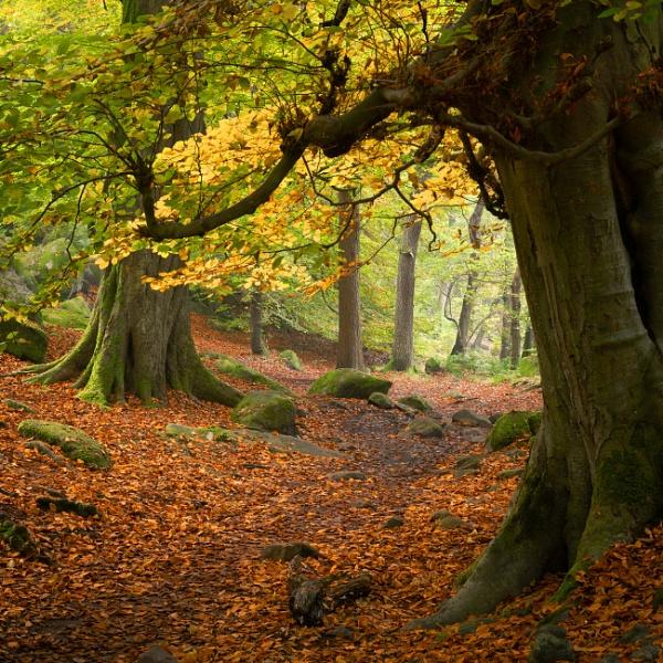 Autumn Trail by Trevhas
