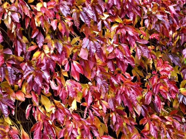autumn creeper by jenny007