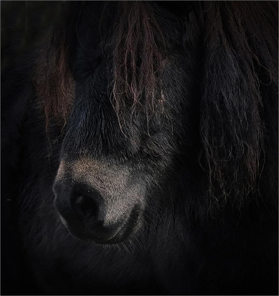 Pony IV